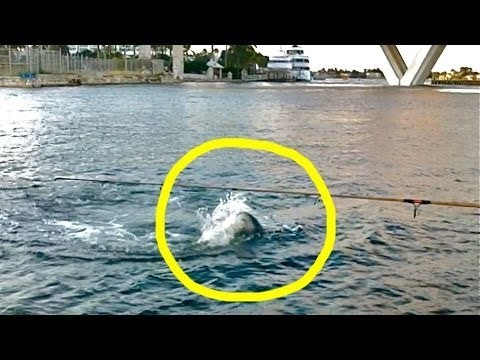 Tarpon Shark Attack Near Cruise Ship