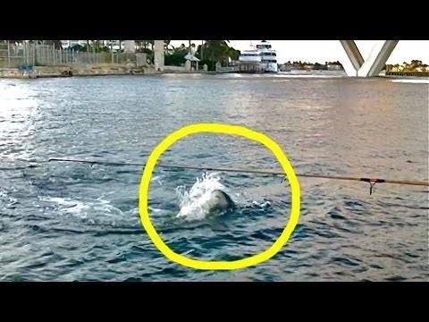 Tarpon Shark Attack Near Cruise Ship