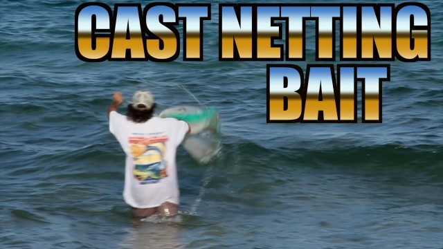 The Art Of Cast Netting Bait