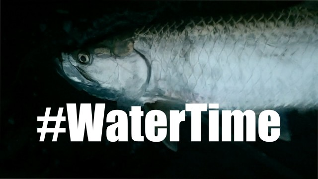 Tarpon Fishing Florida For Noobs – WaterTime