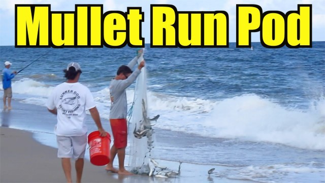 Fall Mullet Migration Beach Fishing – Lunkerdog