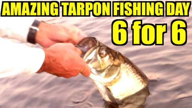 Amazing Tarpon Fishing Day 6 for 6