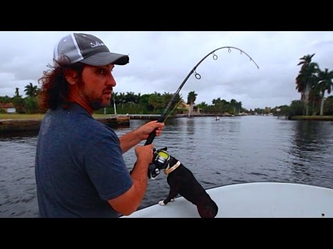 Big Tarpon Fishing Spring 2015