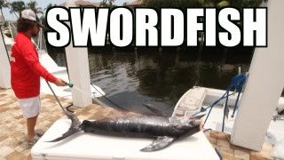 Swordfish On The Zinndog – Lunkerdog
