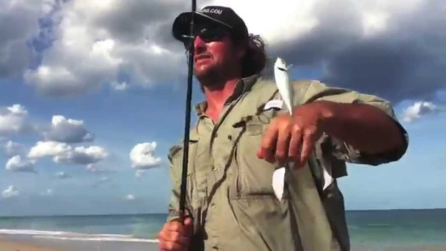 Casting Live Bait  Beach Bait Basics – The Mullet Run