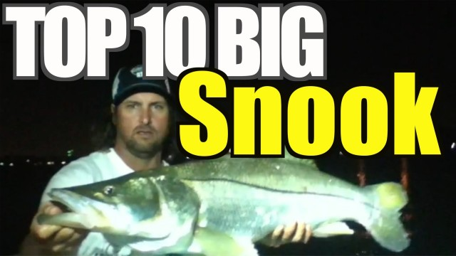 Top 10 BIG Snook Catches