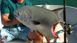 Trophy Permit Gets Sharked – SHARK WEEK