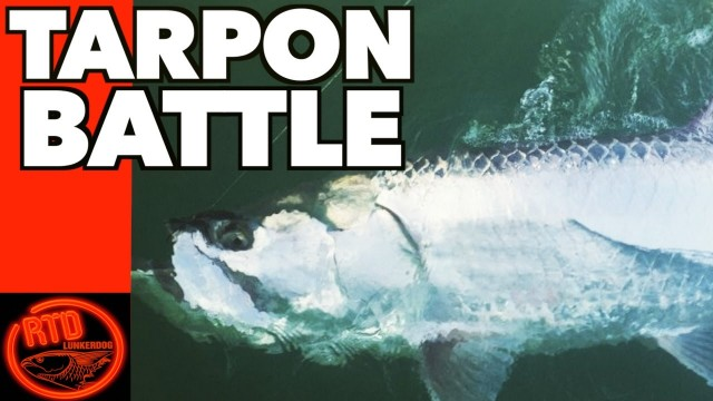 Beach Tarpon Fishing Battle – Lunkerdog