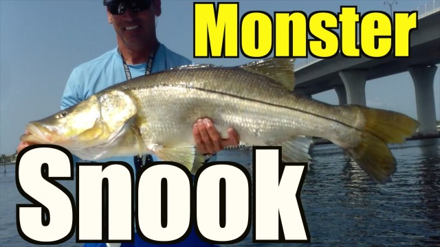 Best Monster Snook Video –  Stuart Florida
