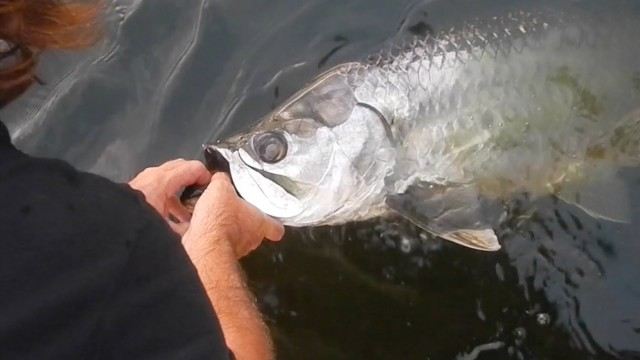 This Guy Catches a Dinosaur Fish…. And He Lets It Go