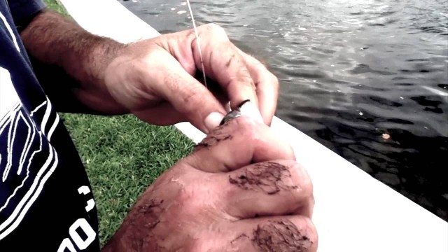 How To Hook A Live Mullet