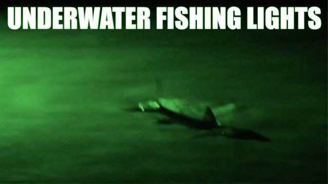 Snook and Tarpon Fishing  – Underwater Fishing Lights LIVE BAIT or FLY