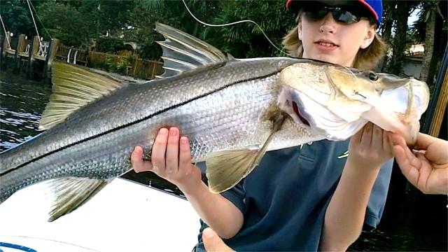 Inshore Snook Fishing – Live Shrimp Bait