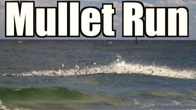 Mullet Run Highlight 2014