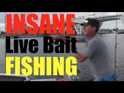 Extreme Mullet Migration Fishing Bait Everywhere