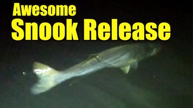 Big Snook Fishing – Fort Lauderdale Florida