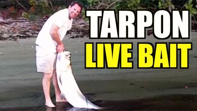 Tarpon Fishing Inshore – Cousin Eric's Big Day