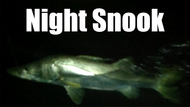 Big Snook Fishing with Captain Jeff