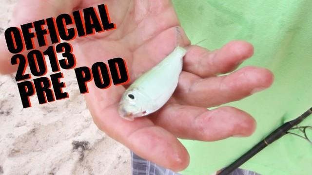 Live Bait Pilchard Fishing