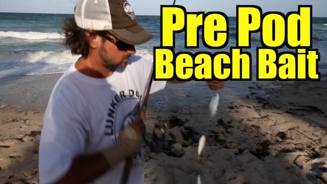 Catching Live Bait for Fishing – Captain Jeff