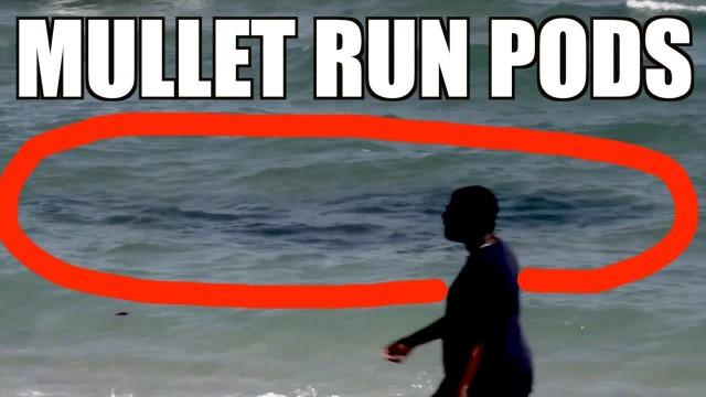 Mullet Run Pods of the Beach (Fall)