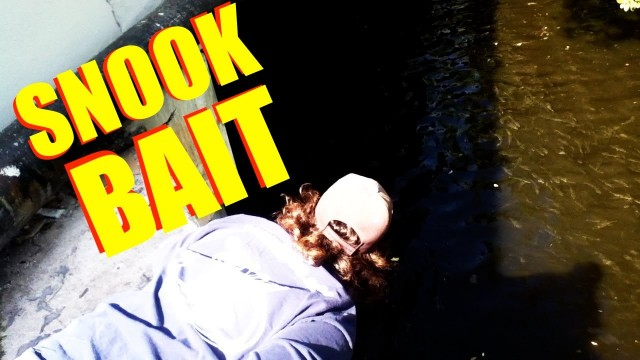 How To Find Snook Bait